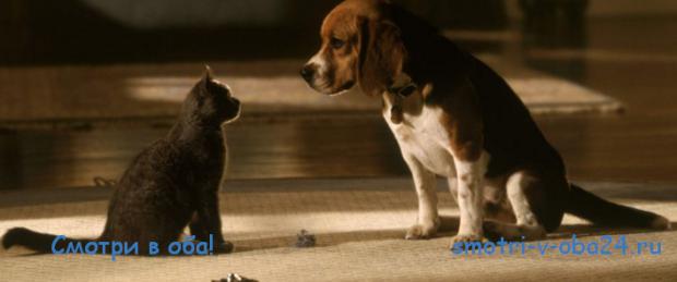 Смотреть комедии про животных