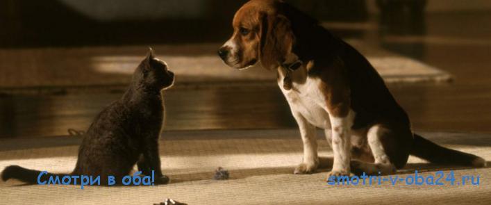 Комедии про животных - Смотри в оба