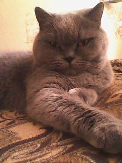 Сегодня в России День Кошек