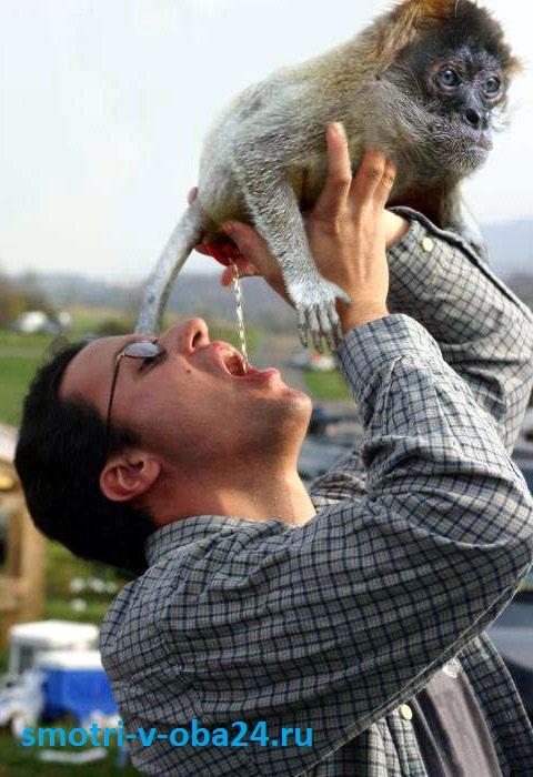 Фото из интернета - Refreshment (закуска)