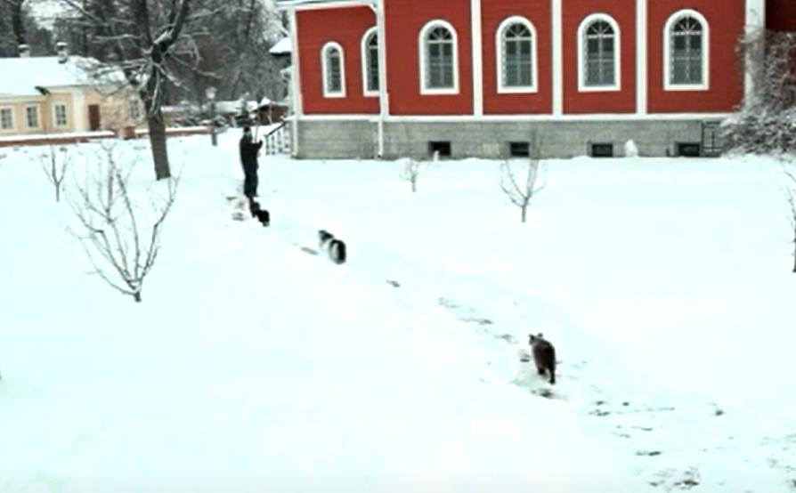 Крестный ход котов в Оптиной пустыни